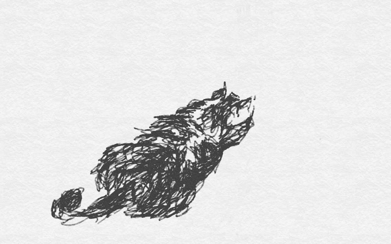 Tekenen. Schets. Kat. Dier. Zen zien tekenen